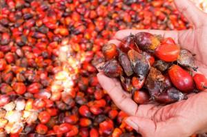 une-huile-de-palme-2