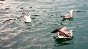 visu-oiseaux-12