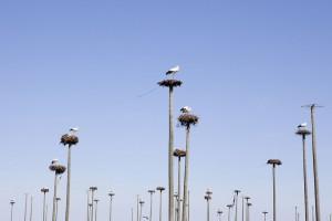 visu-oiseaux-15
