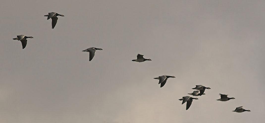 visu-oiseaux-3