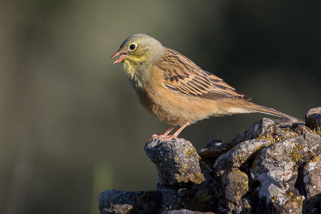 visu-oiseaux-8
