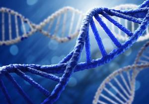 ADN-shutterstock