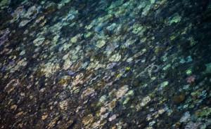 Blanchissement-coraux-3