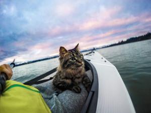 chat-kayak-4