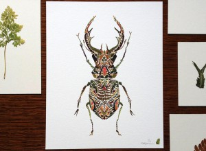Dessins-nature-15
