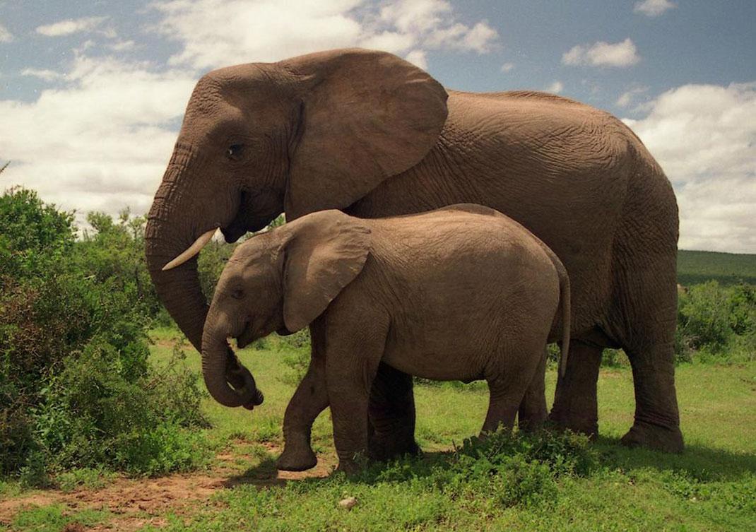 Deux-éléphants-11