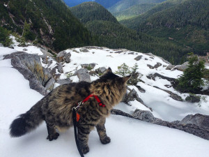 chat-montagne