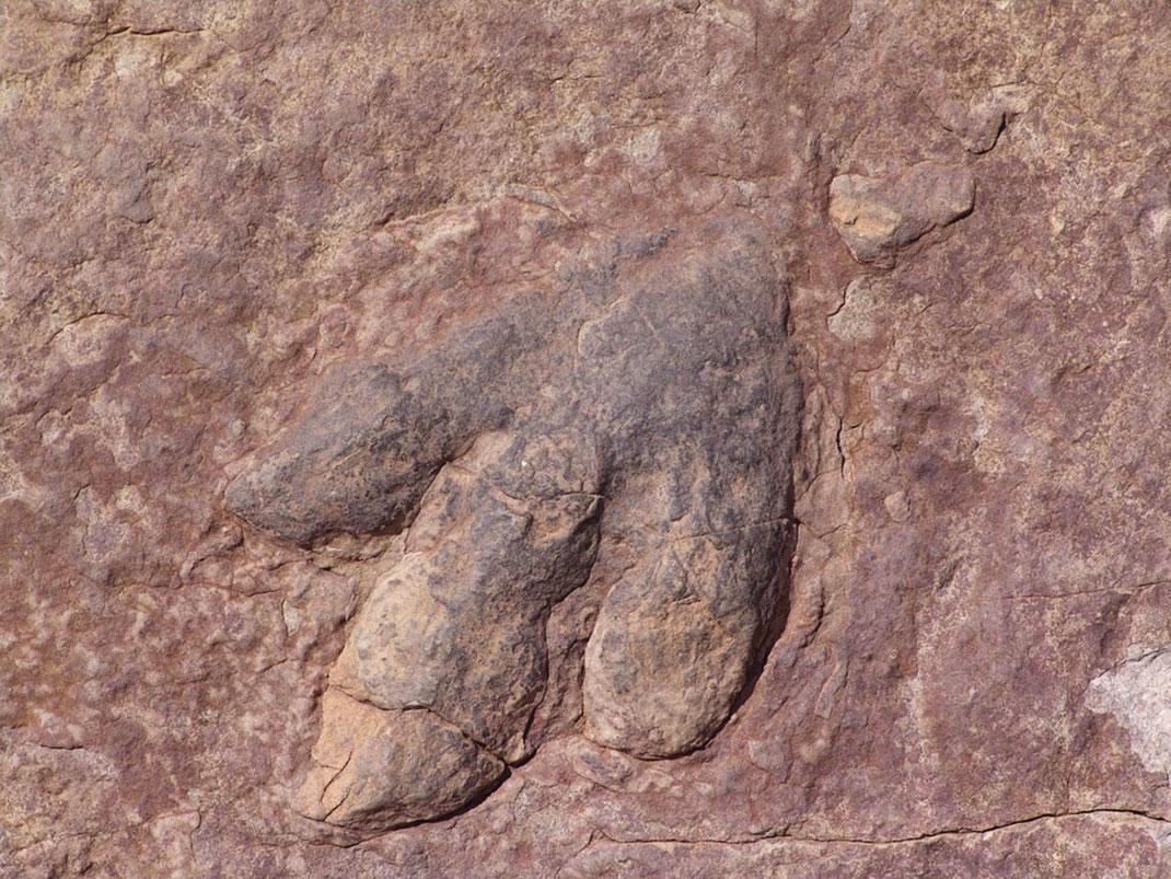 Empreinte-dinosaure