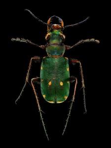 LevonBiss-Insectes-1