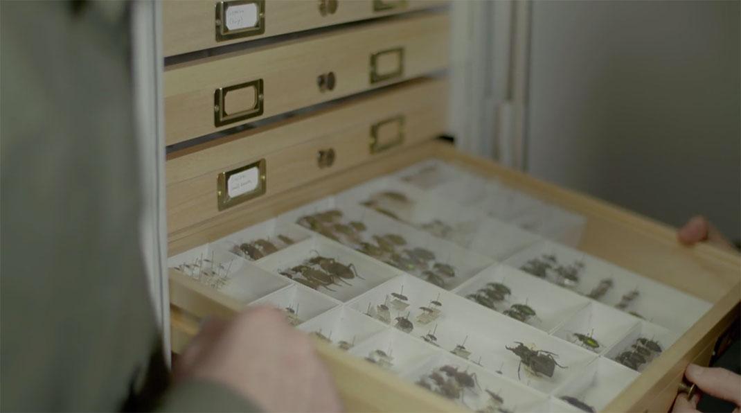 LevonBiss-Insectes-10