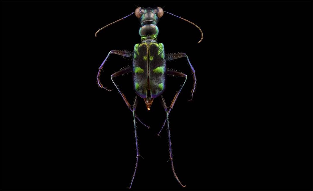 LevonBiss-Insectes-11
