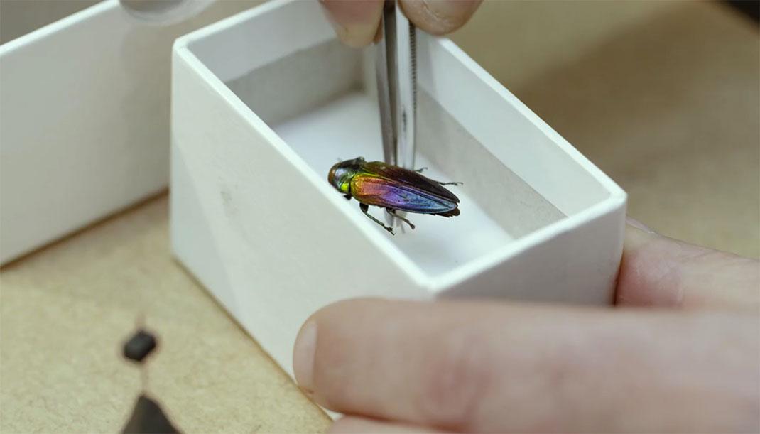 LevonBiss-Insectes-13
