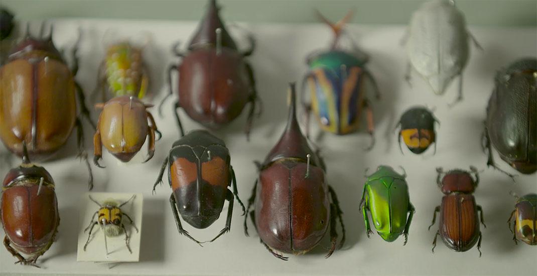 LevonBiss-Insectes-14