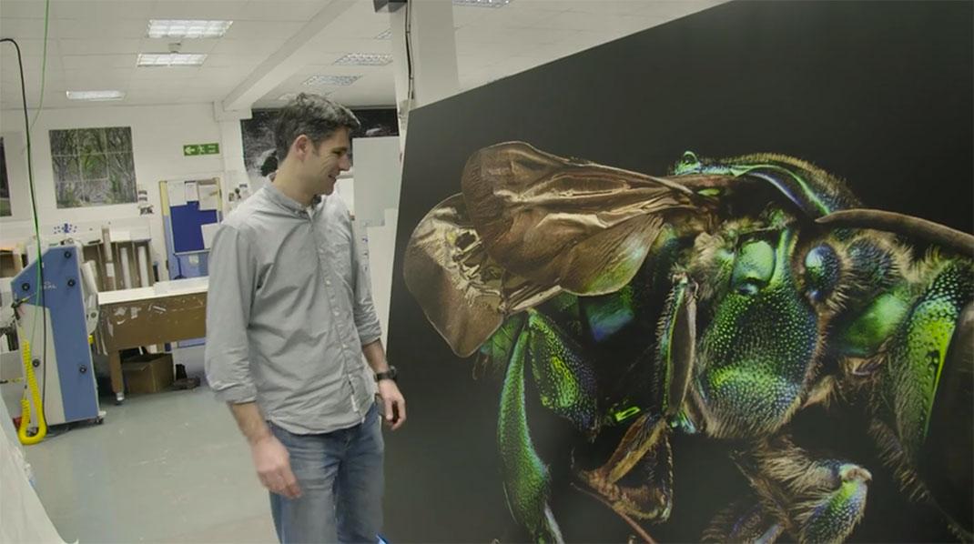 LevonBiss-Insectes-15