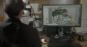 LevonBiss-Insectes-16