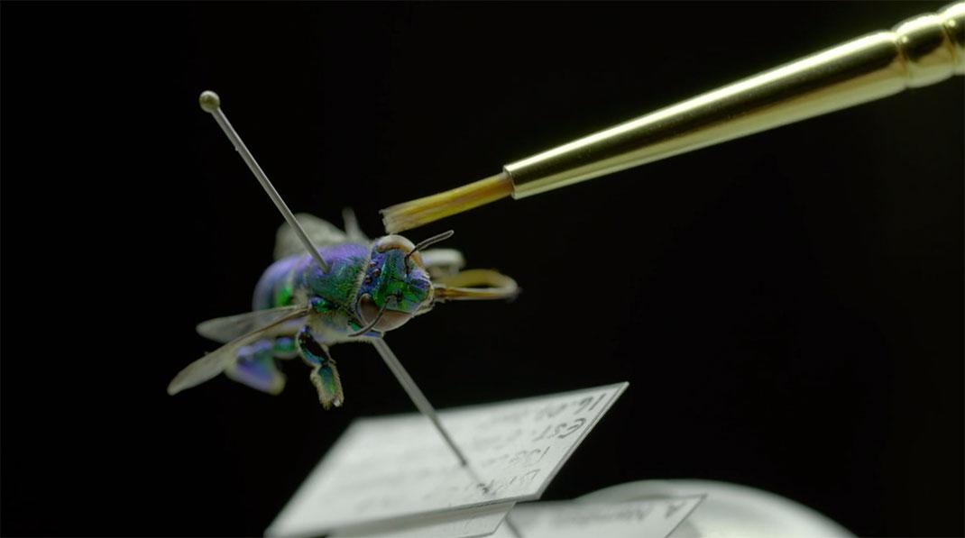 LevonBiss-Insectes-17