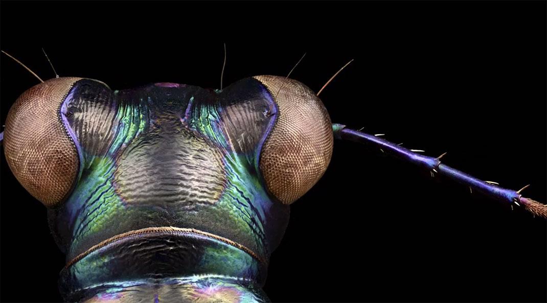 LevonBiss-Insectes-18
