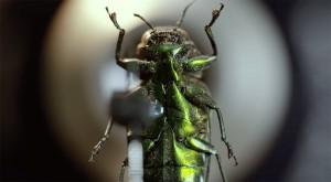 LevonBiss-Insectes-19