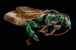 LevonBiss-Insectes-2