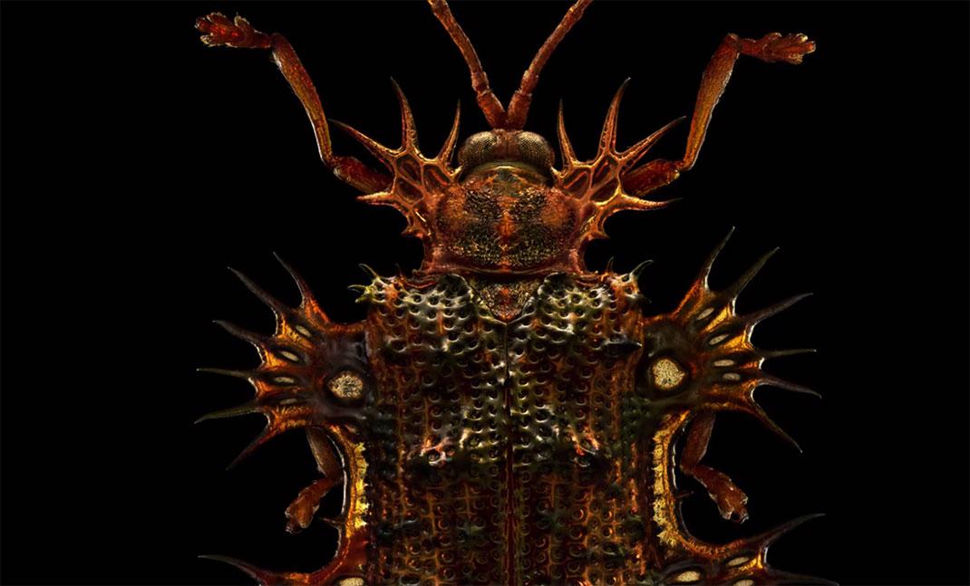 LevonBiss-Insectes-21