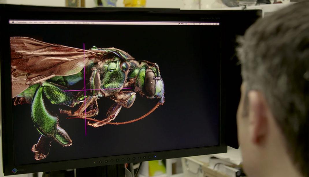 LevonBiss-Insectes-22