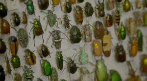 LevonBiss-Insectes-23