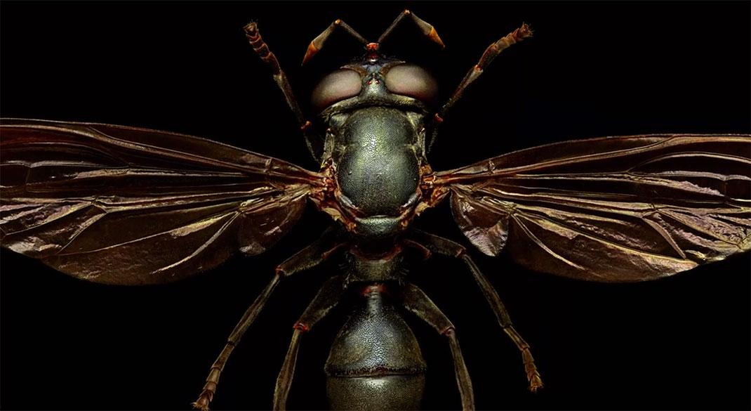 LevonBiss-Insectes-24