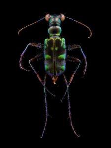 LevonBiss-Insectes-3