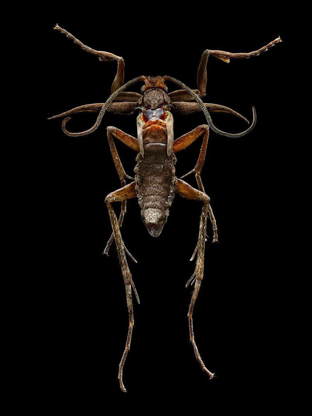 LevonBiss-Insectes-4