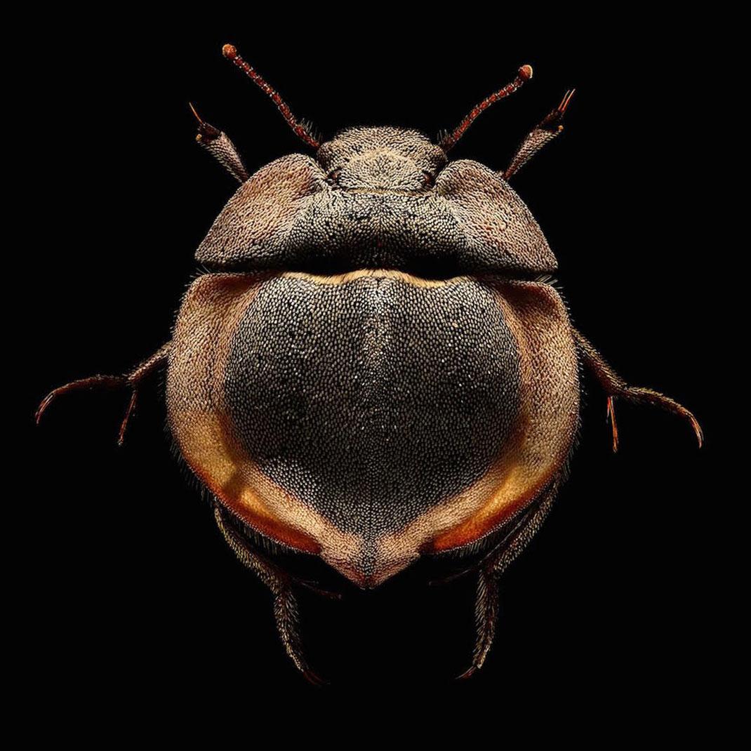 LevonBiss-Insectes-6