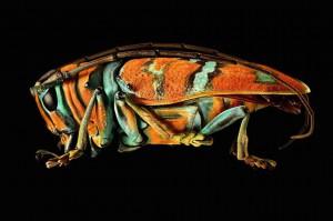 LevonBiss-Insectes-7