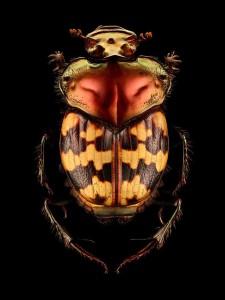 LevonBiss-Insectes-8