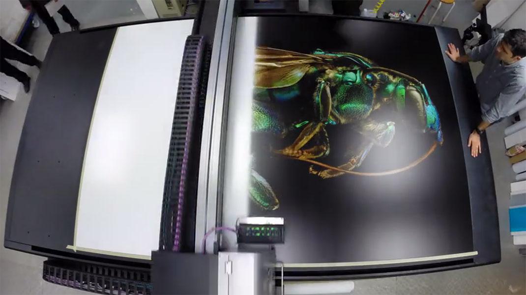 LevonBiss-Insectes-9