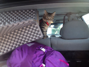 chat-voiture