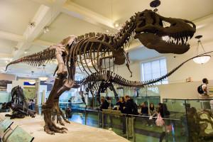 Squelette-T-Rex