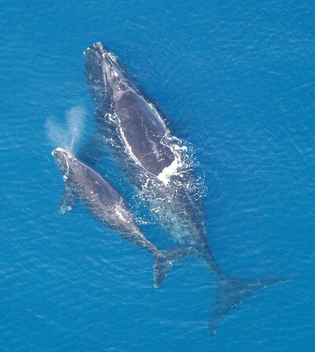 baleine-noire