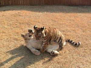 bebes-animaux-6