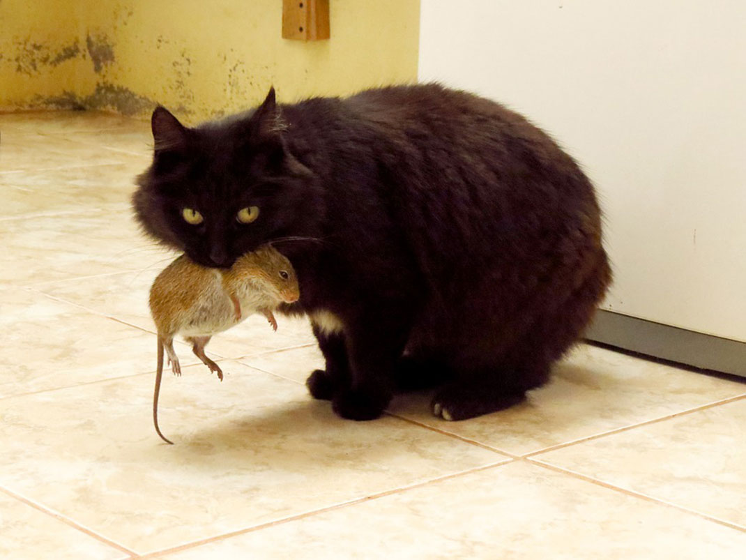 chat-chasse