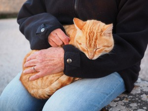 chat-domestique