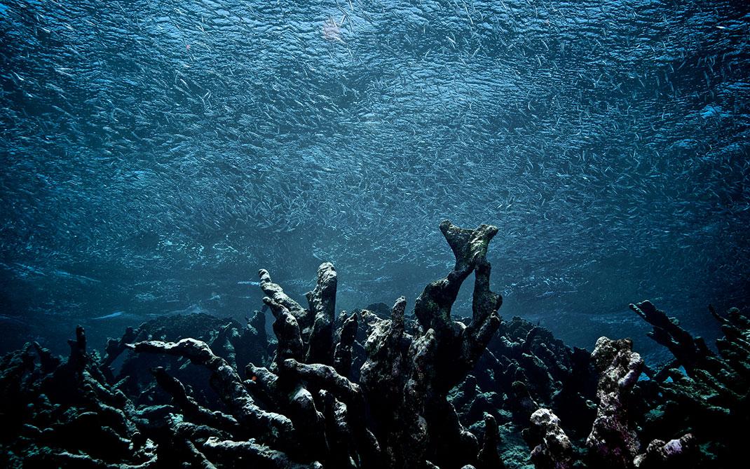 corail-mort