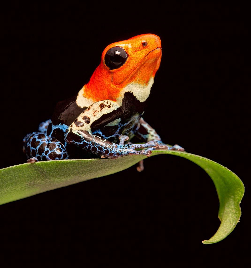 grenouilles-beaute-surprenante-contenu-une