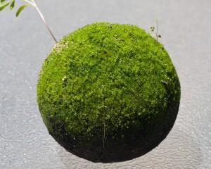 hikaru-dorodango-art-7