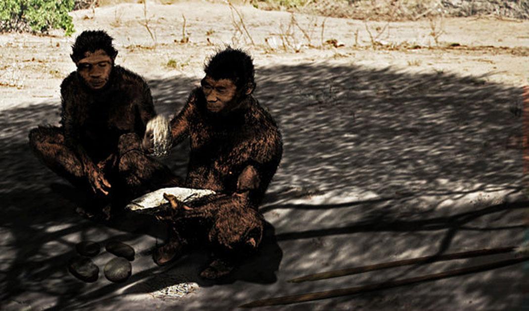 homo-erectus-social