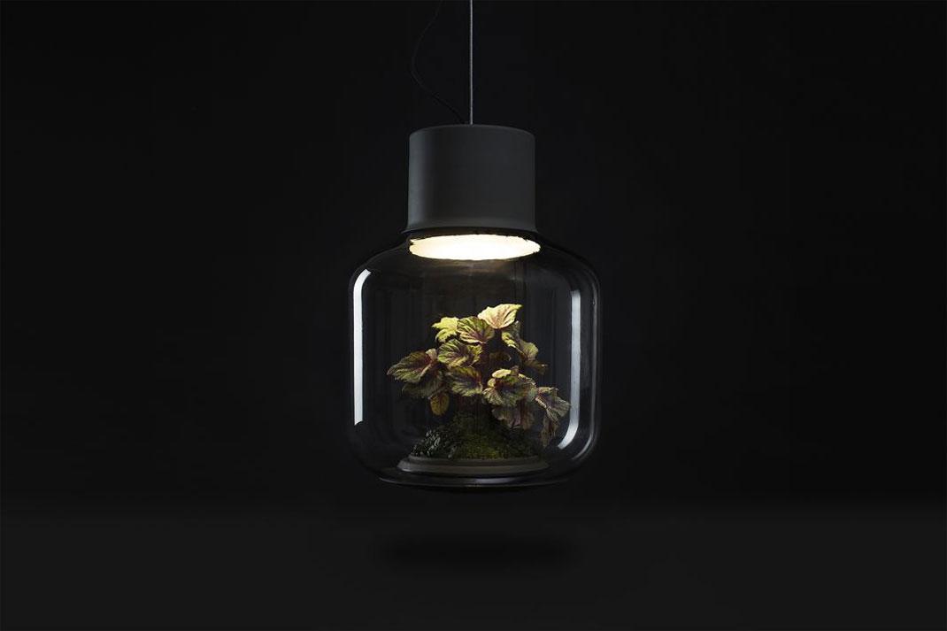 lampes-luminaire-terrarium-13