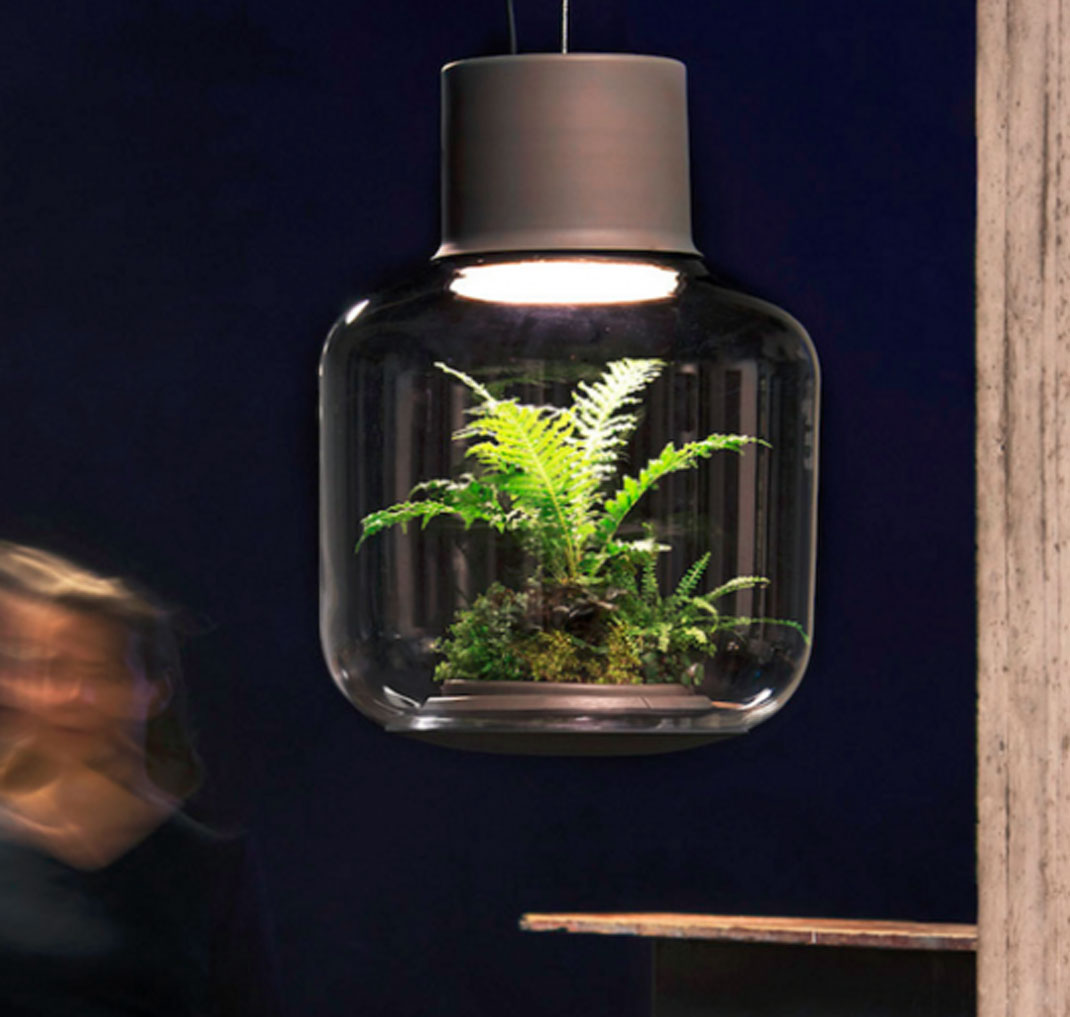 lampe pour plante la taille de la lampe with lampe pour plante planter avocat avocatier. Black Bedroom Furniture Sets. Home Design Ideas