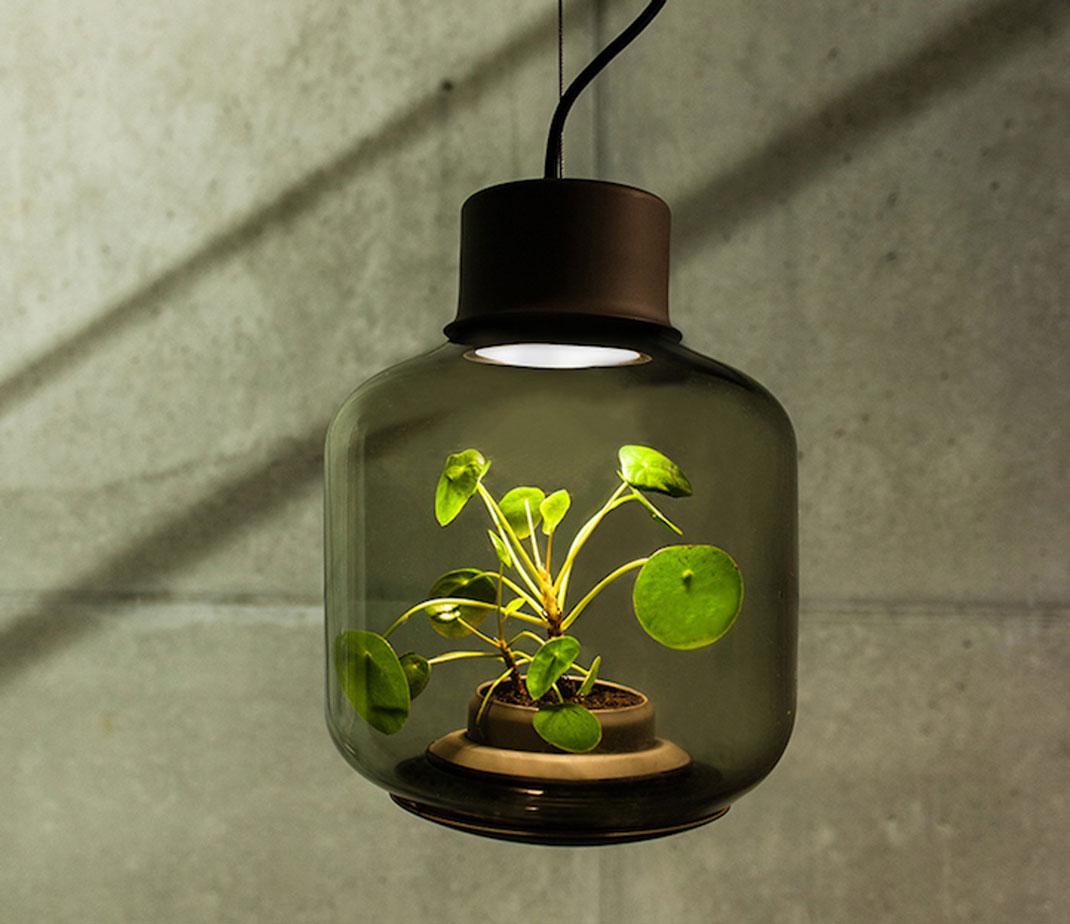 lampes-luminaire-terrarium-8
