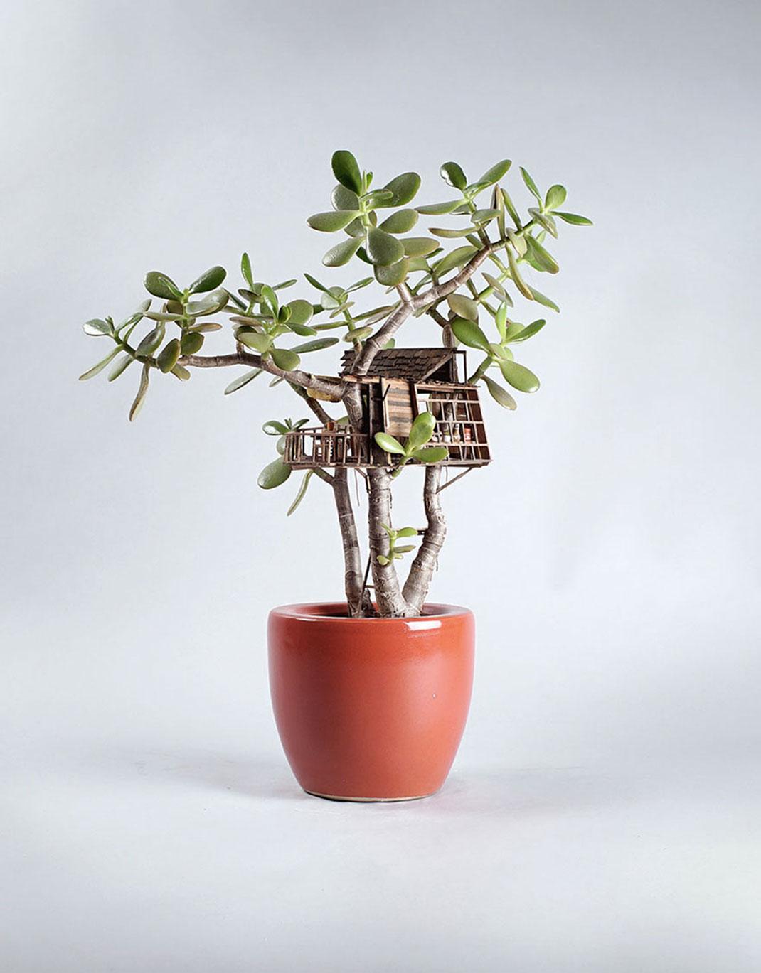 mini-maison-plante-13