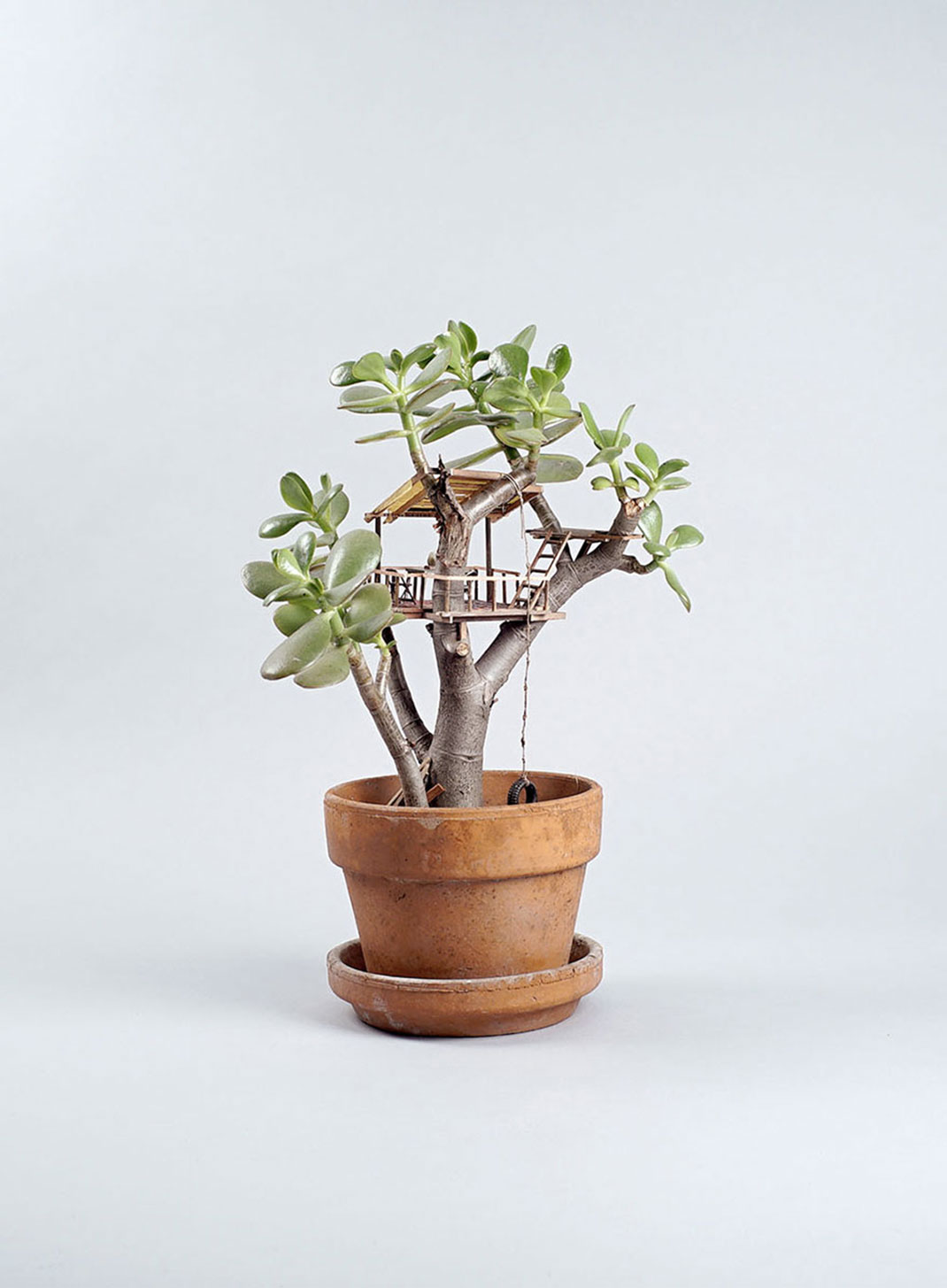 mini-maison-plante-16