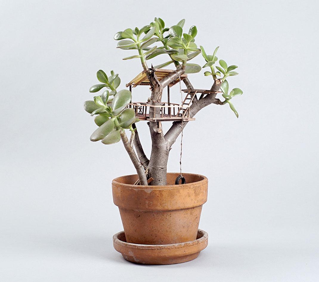 mini-maison-plante-2
