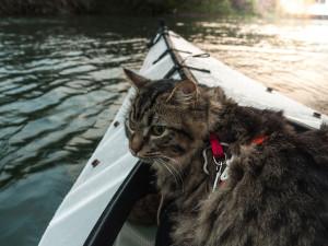 chat-kayak
